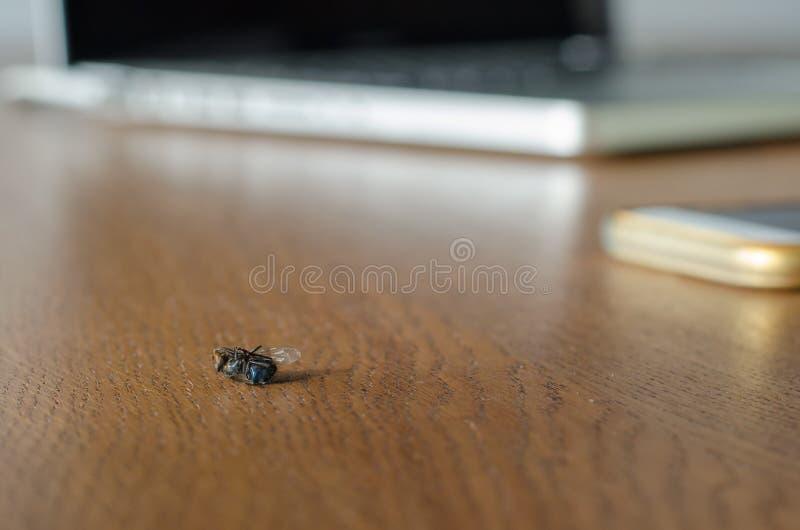 Tote Trockenfliege auf dem Holztisch gegen unscharfen Laptop und mobi stockfotografie