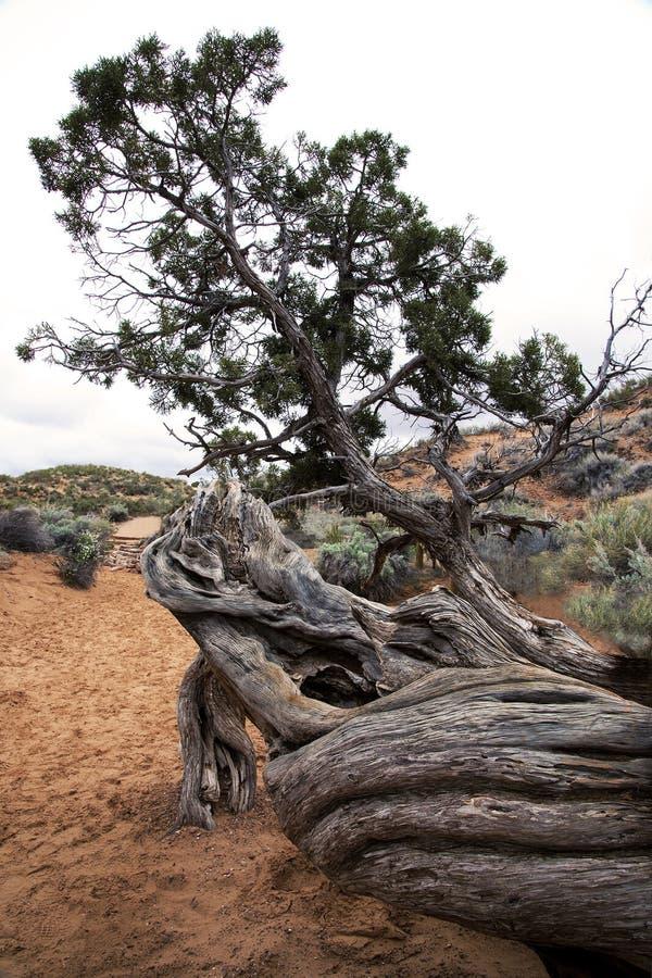 Toter Baum über einer Spur, Bögen Nationalpark, Moab Utah lizenzfreies stockfoto