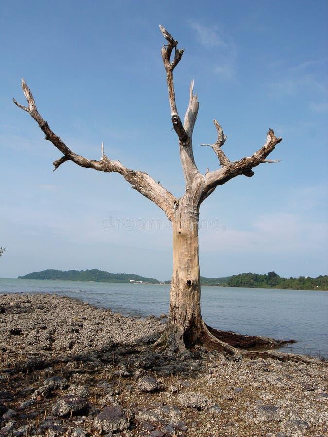 Toter Baum stockfotografie