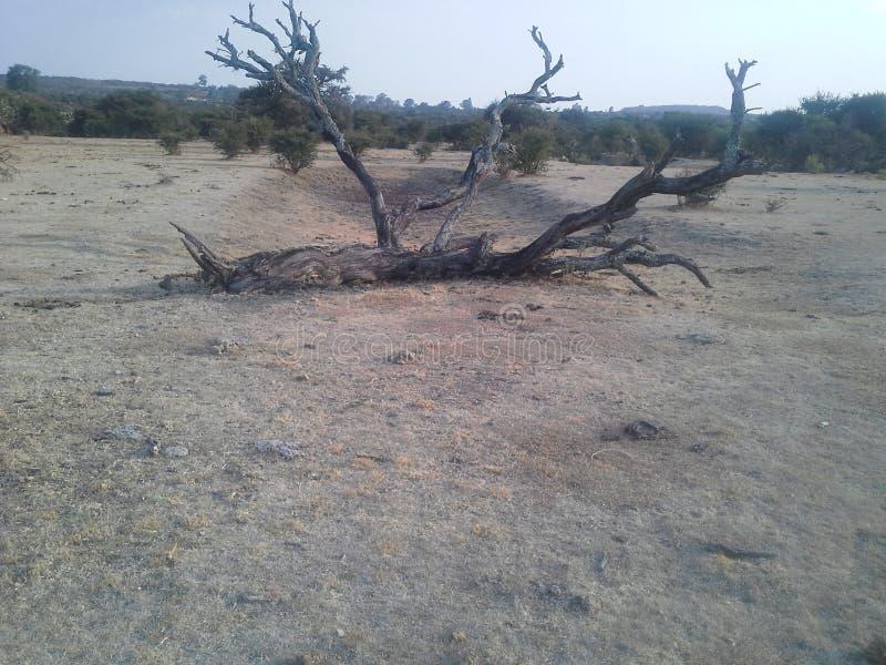 Toter Baum stockbild