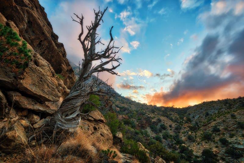 Toter Baum, Al Hajar Mountains in Oman lizenzfreies stockbild