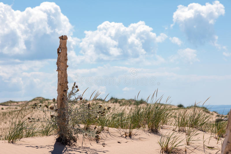 Toter Baum an den Schlafenbärn-Dünen stockbilder