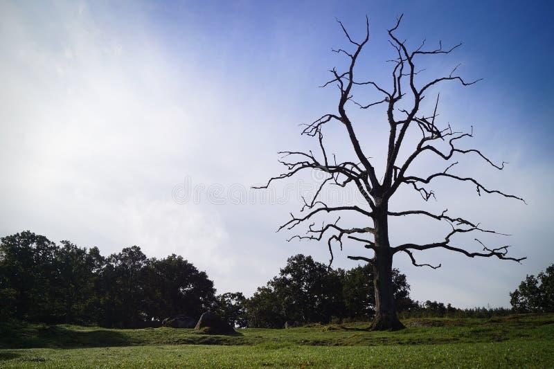 Toter Baum in der Koppel stockfotos