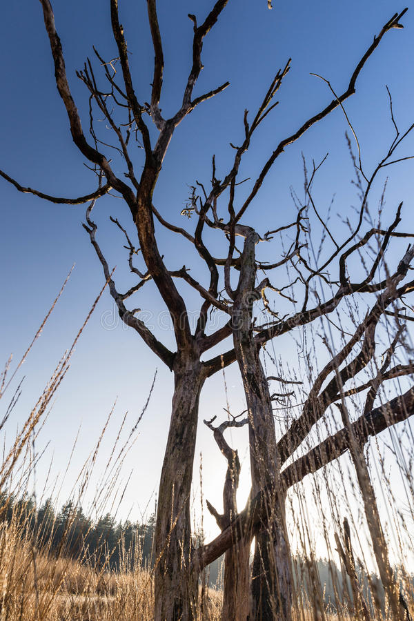 Toter Baum in der Sonne lizenzfreie stockbilder