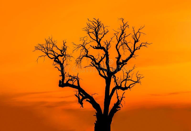 Toter Baum des Schattenbildes auf dem Sonnenuntergang stockfotos