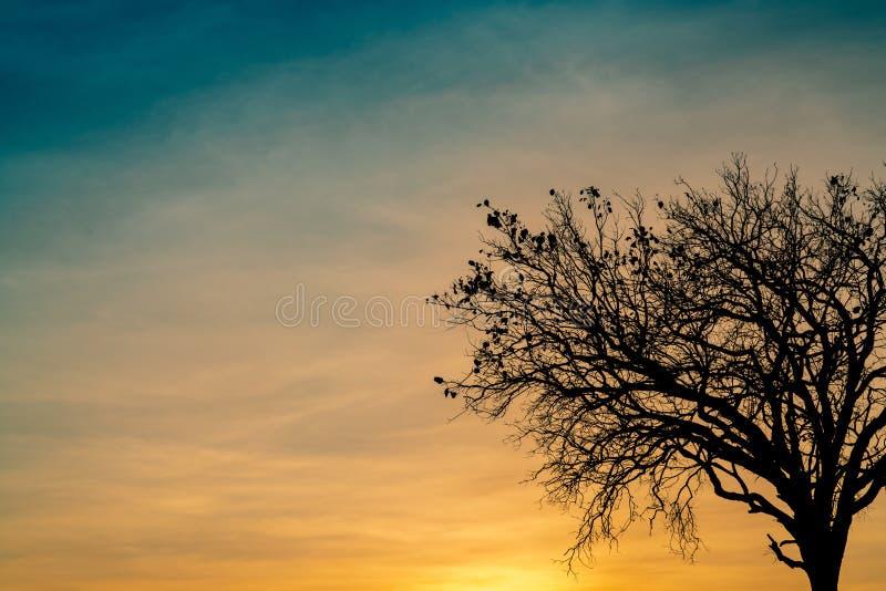 Toter Baum des Schattenbildes auf schönem Sonnenuntergang oder Sonnenaufgang auf goldenem Himmel Hintergrund für ruhiges und ruhi stockfoto