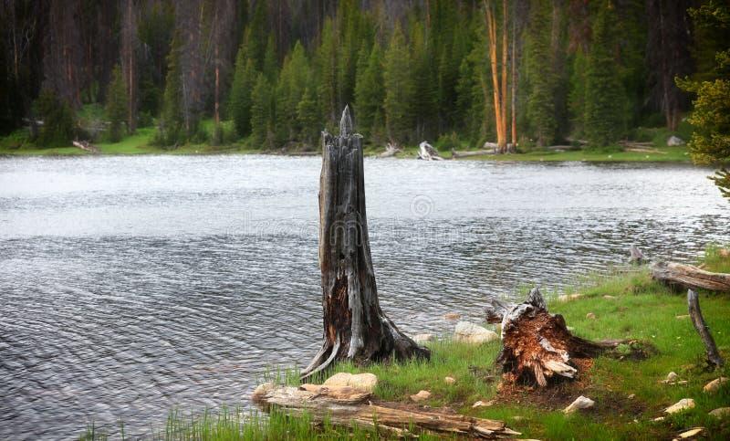 Toter Baum durch den See in staatlichem Wald Uinta Wasatch lizenzfreies stockbild