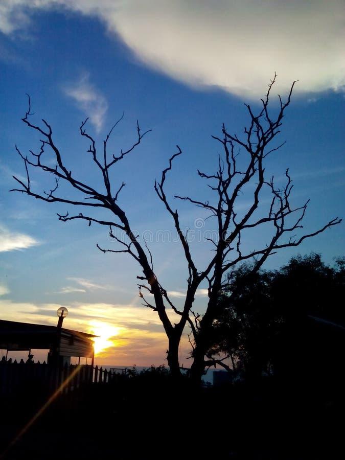 Toter Baum gegen Sonnenuntergang lizenzfreie stockbilder