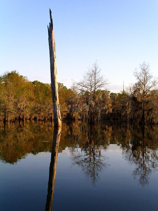Toter Baum im See stockfotos