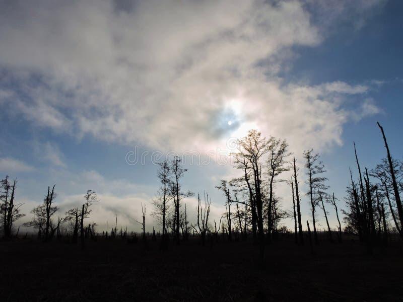 Toter Baum im Sumpf lizenzfreie stockfotos