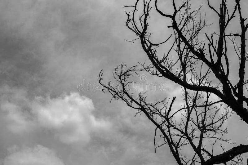 Toter Baum mit bewölktem Himmel lizenzfreie stockbilder