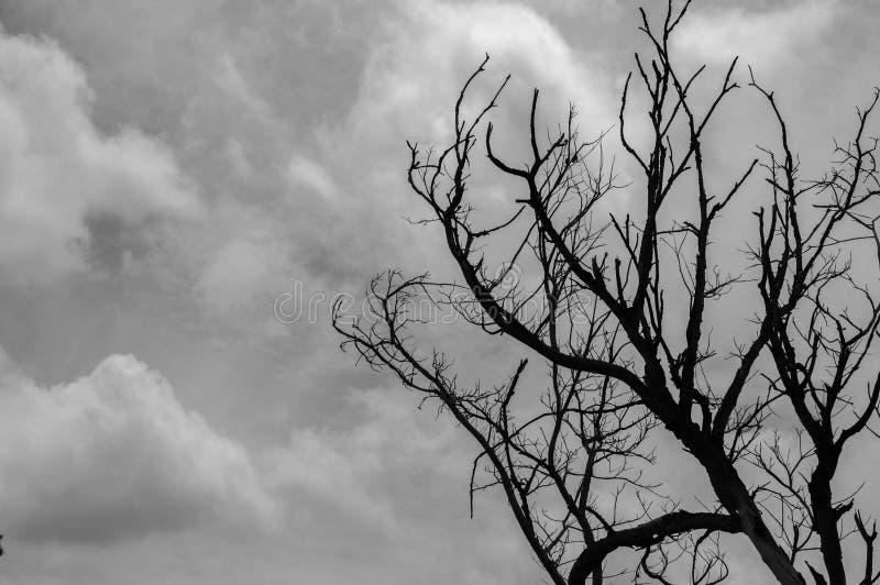 Toter Baum mit bewölktem Hintergrund des Himmels lizenzfreie stockbilder
