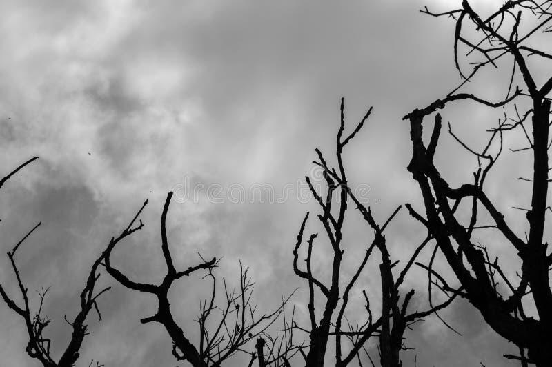 Toter Baum mit bewölktem Hintergrund des Himmels in Schwarzweiss lizenzfreies stockfoto