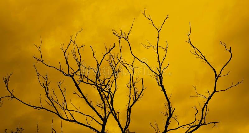 toter Baum mit einem surrealen furchtsamen roten Himmel lizenzfreie stockfotografie