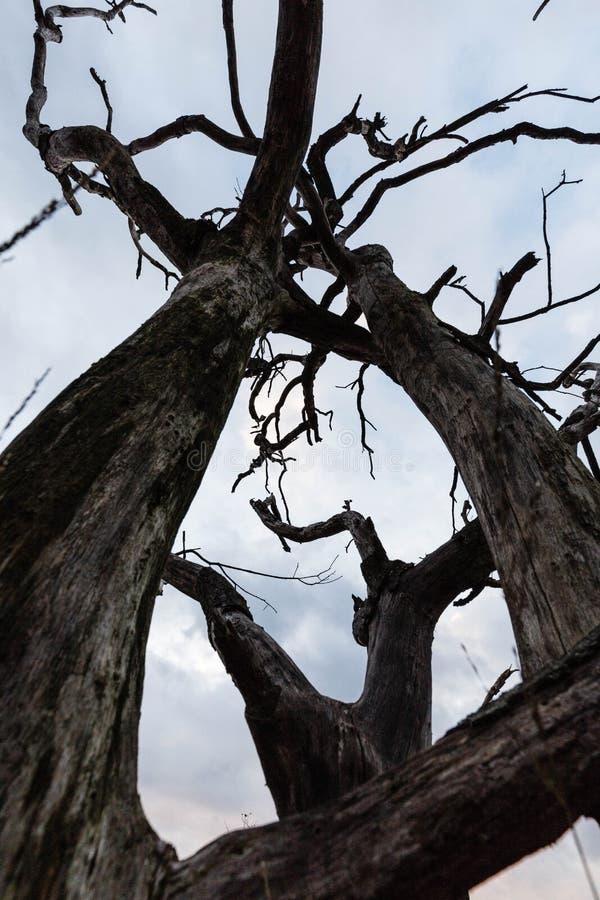 Toter Baum von Unterseite zu Spitze lizenzfreie stockbilder