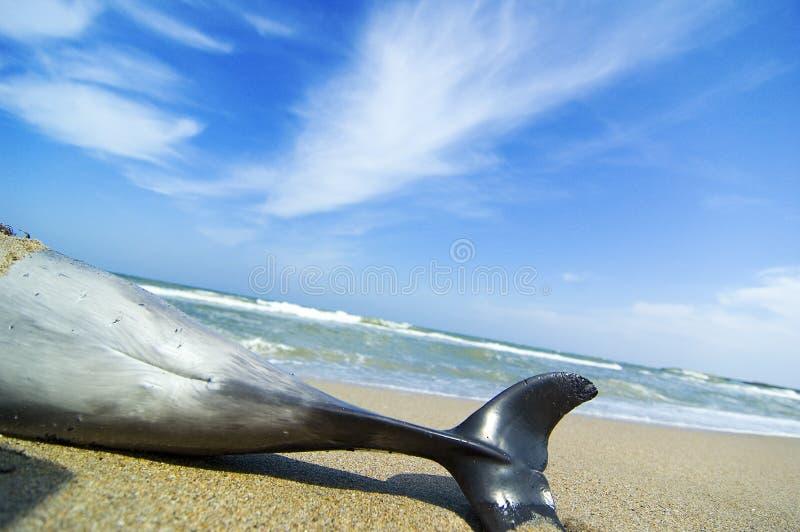 Toter Delphin lizenzfreie stockfotos