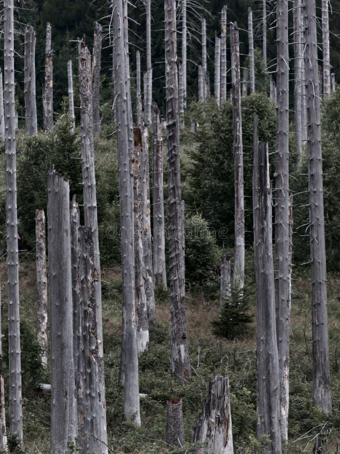 Toter Wald im Harz, Deutschland lizenzfreies stockbild