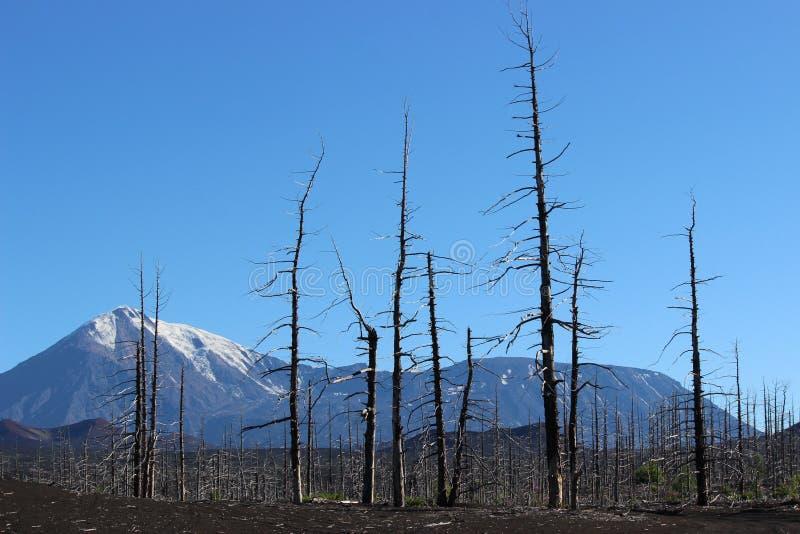 Toter Wald, Tolbachik-Vulkan lizenzfreies stockbild