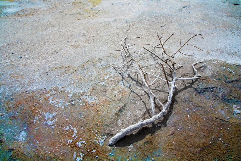Toter Zweig auf einem sauren Boden stockfotos