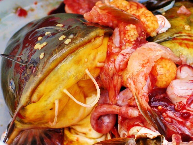 Totes Fische eggson Groppegesicht lizenzfreie stockfotos
