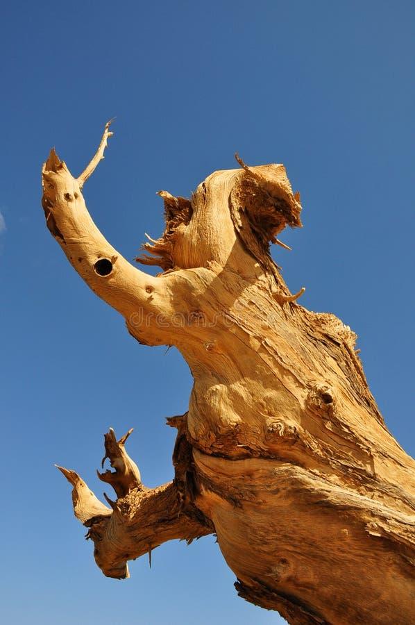 Totes Holz stockfotografie