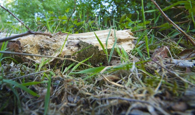 Totes Holz lizenzfreies stockbild
