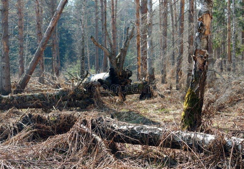 Totes Holz. stockfoto