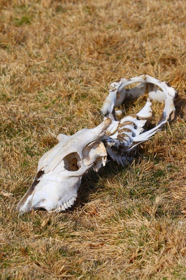Totes Tier Melden