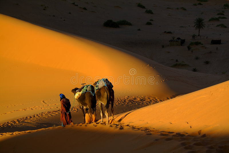 Touareg e cammelli immagini stock