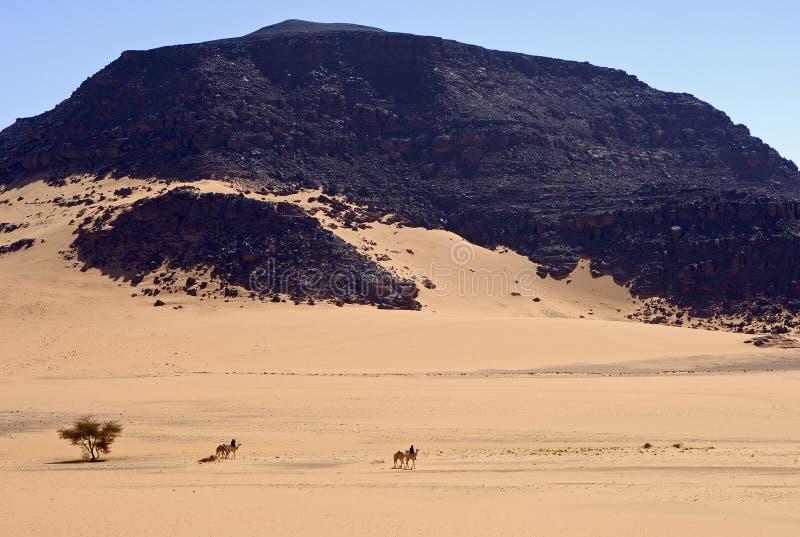 Touareg Nomaden, die eine beträchtliche Wüste kreuzen stockfotografie