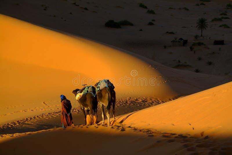 Touareg y camellos imagenes de archivo