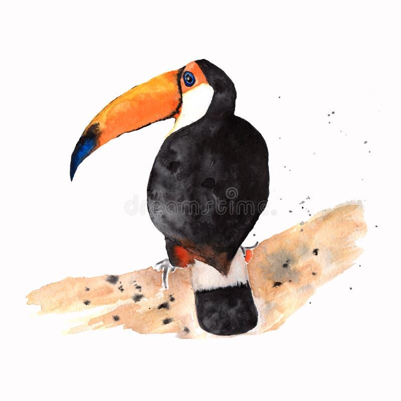 Toucan在白色背景的鸟象 巴西文化概念 五颜六色的设计 热带美丽的鸟 被构造的飞溅水彩 向量例证