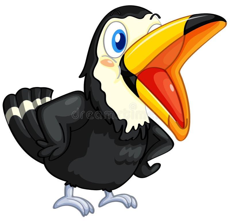 toucan λευκό ανασκόπησης ελεύθερη απεικόνιση δικαιώματος