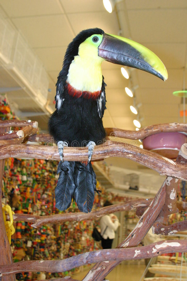 Download Toucan 1 stock image. Image of watches, green, perch, yellow - 49633