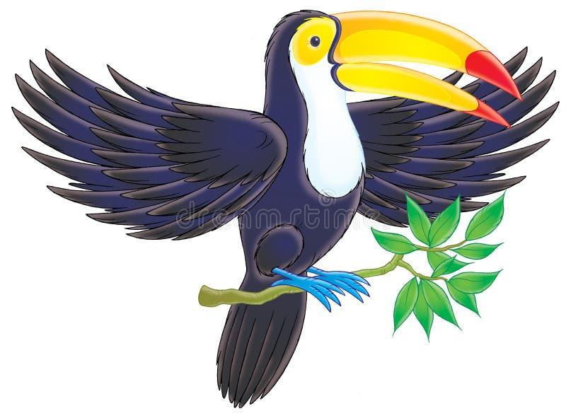 toucan απεικόνιση αποθεμάτων