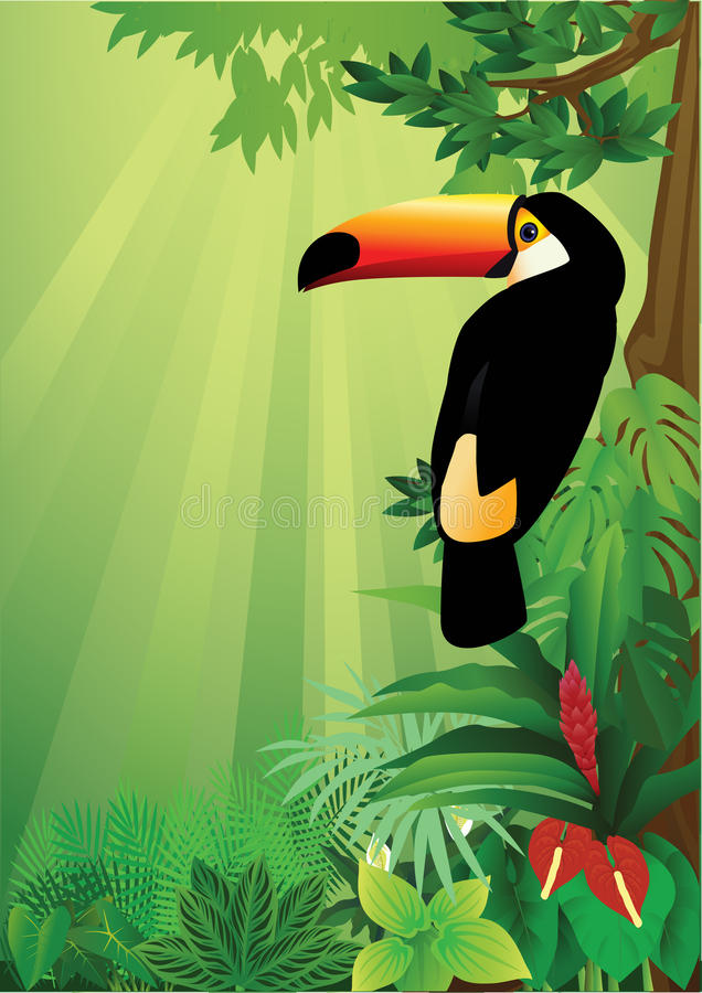 Toucan ilustração royalty free