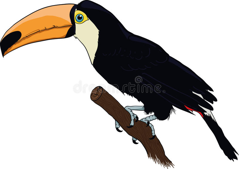 Toucan photographie stock