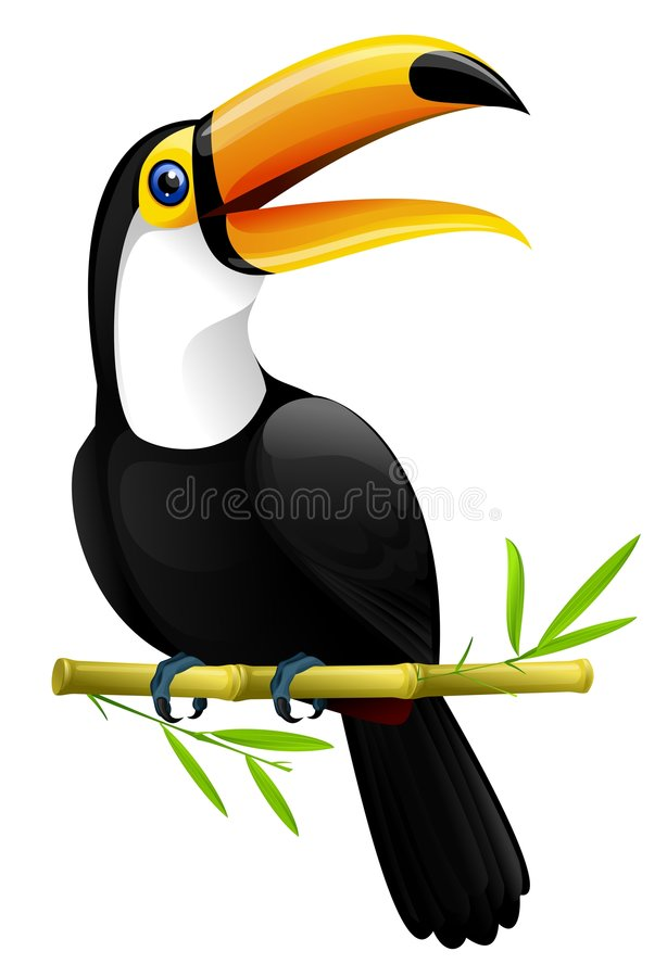 Toucan. Colorful toucan sitting on a bamboo branch , isolated on white