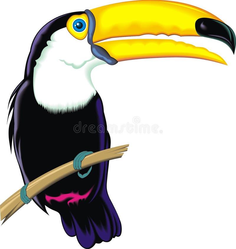 Toucan stock abbildung