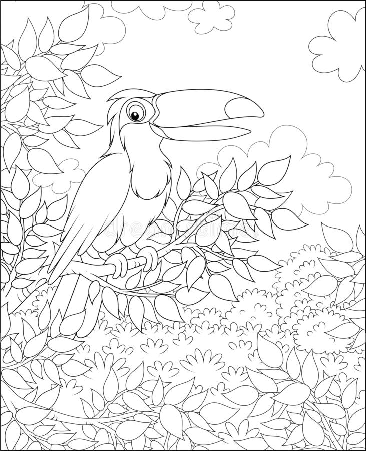 Toucan with a big funny beak. Big tropical bird perched on a tree branch in jungle on a sunny summer day, black and white vector illustrations in a cartoon style stock illustration