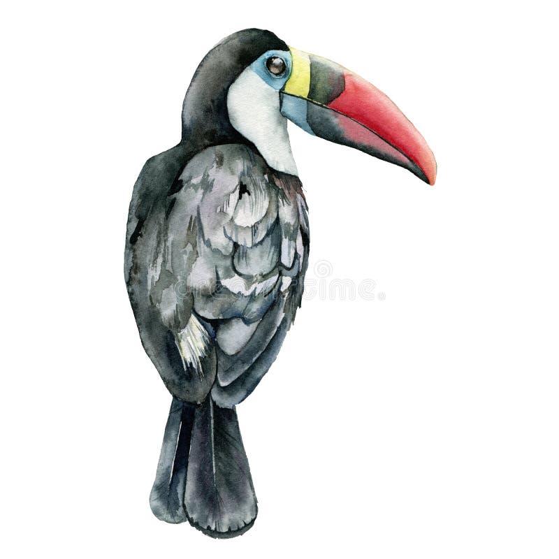 Toucan d'aquarelle Illustration peinte à la main avec l'oiseau tropical d'isolement sur le fond blanc l'espace d'illustration de  illustration de vecteur