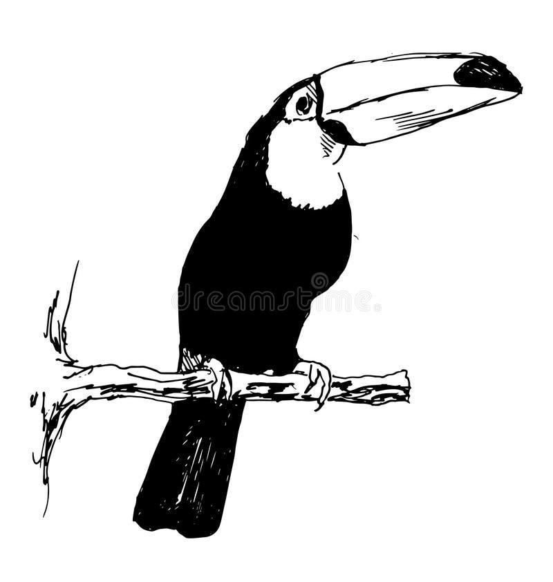 Toucan de croquis de main illustration libre de droits