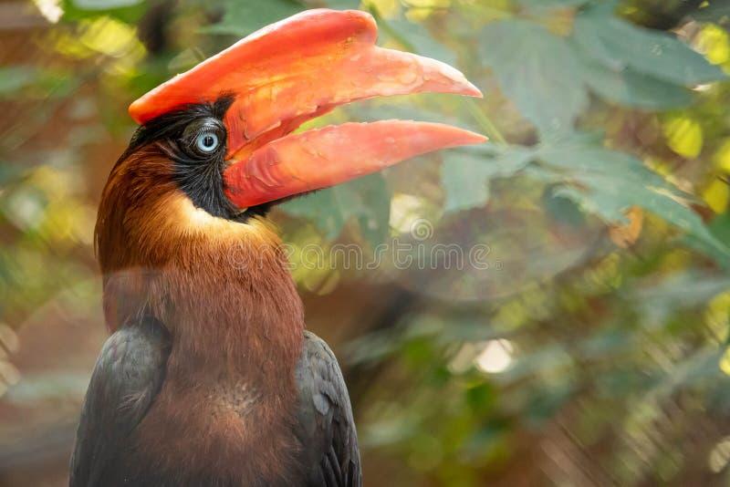 Toucan, an exotic bird with a large beak stock photography