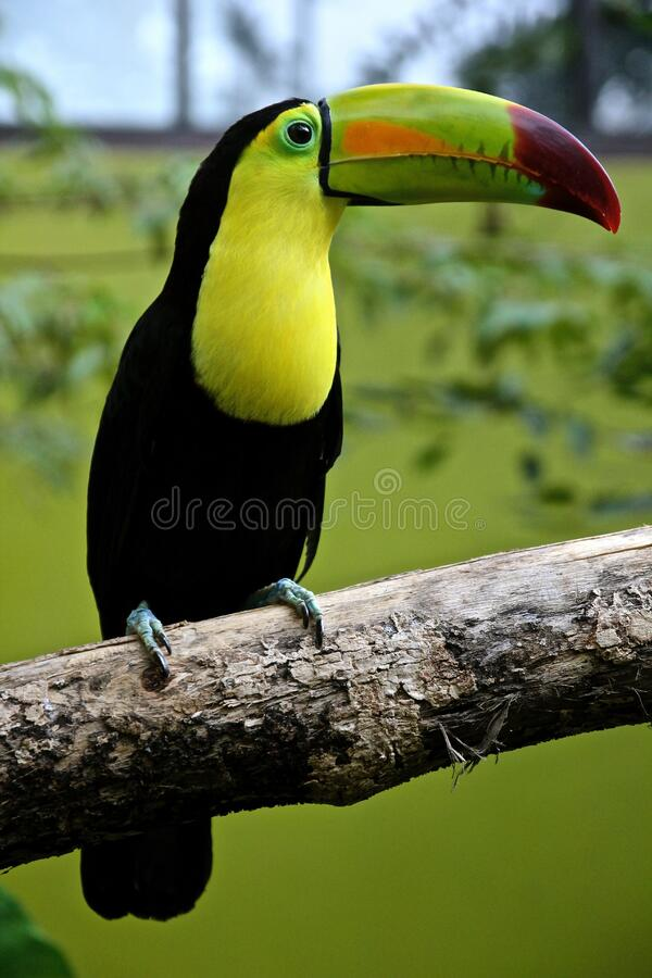 Toucan Parrot Outdoors Free Public Domain Cc0 Image