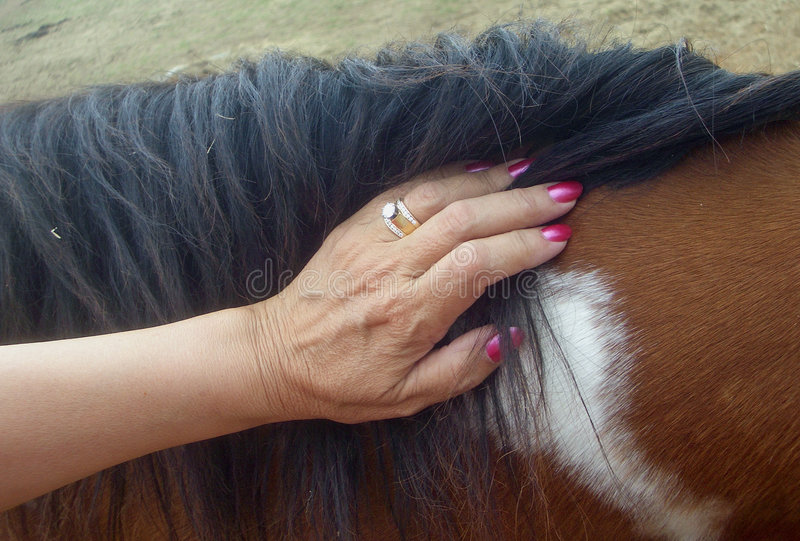 The Touch of a Horse stock images