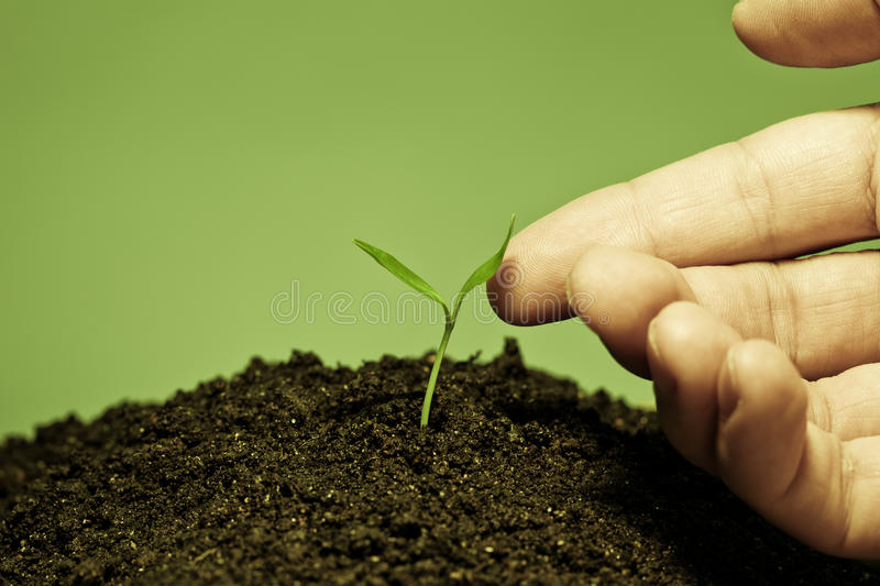 Download Touch to plant stock image. Image of achievement, human - 13918229