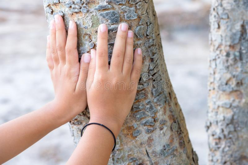Touch the Tree Trunk stock photo