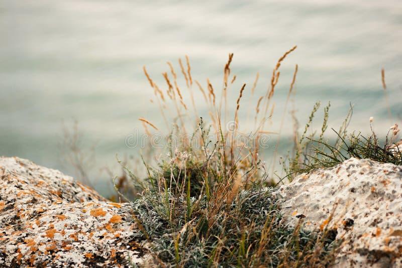 Touffe d'herbe s'élevant entre deux pierres sur la côte, copyspace image stock