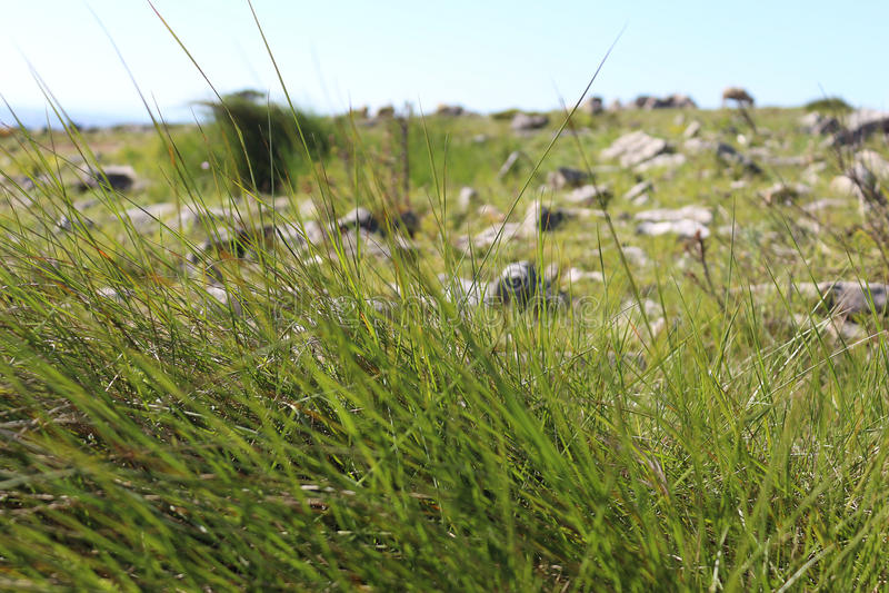 Touffe des herbes photographie stock