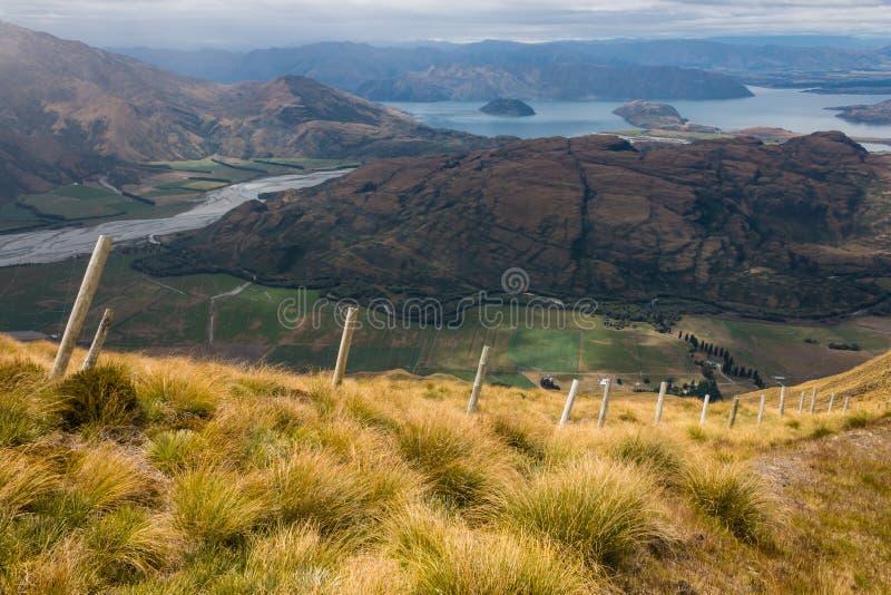Touffe s'élevant au-dessus du lac Wanaka images stock